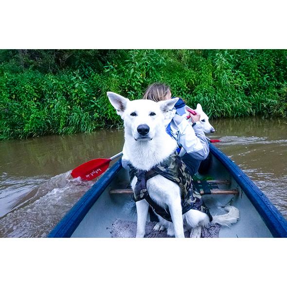 Kanufahrt und Hunde Trekking in Bueren