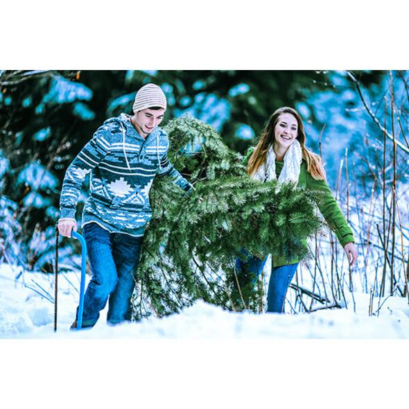 Weihnachtsbaum faellen für 2